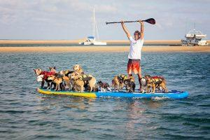 Pet Friendly Businesses and Activities